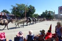 Pferde Kolonne des National Forest Service