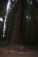 Ein seeeehr grosser Baum